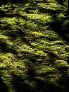 moss@http://www.flickr.com/photos/lluisvinagre/