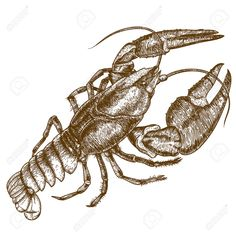 Crawfish Stock Illustrations, Cliparts And Royalty Free Crawfish ...