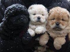 3 cuccioli adorabili