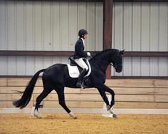 Sternlicht (Soliman de Hus - Rascalino) Hanoverian stallion, photo by PicsOfYou #HTFstallions #dressage #stallion