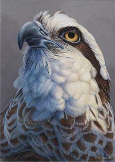 Larger than Life - Osprey - Osprey by David Kitler