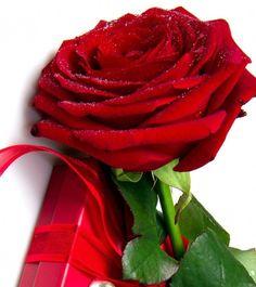 Beautiful Red Roses, Fruit, Beautiful Roses, Bonito