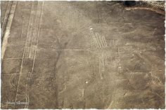 Have you heard about the Nazca Lines?  Hundreds of years ago figures were built on one of the most arid parts of the world and can only be observed from the air or in the highest surrounding hills. #nazcalines #iktravelplanning #paracas  If the #Nazca culture could not overfly, why are this lines built?   Find out with this tour -> http://www.inkanatura.com/en/nazca-lines/ica-and-paracas