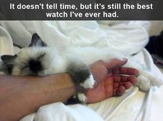 Funny Animal Pictures Of The Day - 24 Pics #funnypics #funny #lol www.mad4bikesuk.co.uk