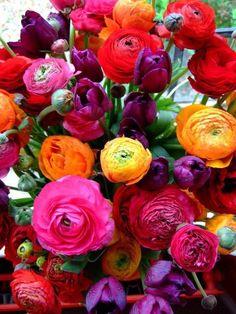 Ranunculus: ahhh me encantan estas flores! My Flower, Fresh Flowers, Beautiful Flowers, Cactus Flower, Exotic Flowers, Purple Flowers, Rosen Beet, Bouquet Champetre, Flower Seeds
