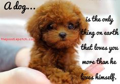 A DOG is the only thing on earth that loves you more