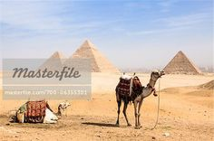 Camels in front of Great Pyramids at Giza, Egypt  – Bild © F. Lukasseck / Masterfile.com: Kreative Stock-Fotografie, Vektoren und Illustrationen für Internet-, Print- und Mobile-Nutzung
