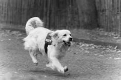 Doggies, by www.rikjanssensfotografie.com uit Tildonk, Haacht - Vlaams-Brabant.