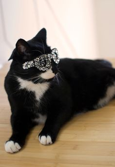 Bling Glasses for Cats by NotsoKittyShop. Because cate love glasses - right? ;)