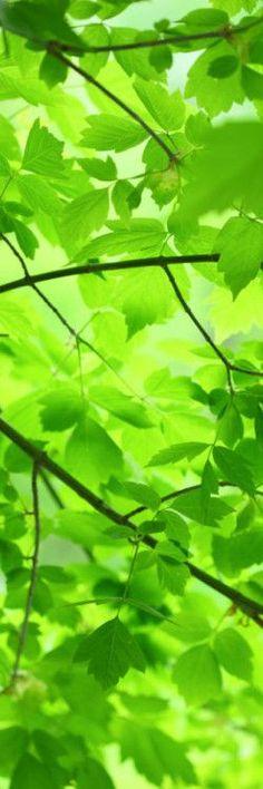 Lovely green colour