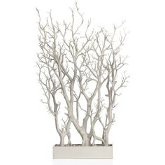 White Branch Tree In Pot (¥15,620) ❤ liked on Polyvore featuring home, home decor, floral decor, plants, decor, fillers, flowers, tree home decor, white home decor and branches home decor