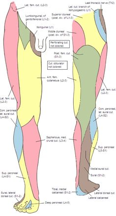 Cutaneous innervation of the lower limbs - Wikipedia, the free encyclopedia