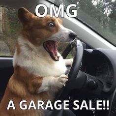 This Corgi Is Too Fast, Too Furryious - Funny pictures and memes of dogs doing and implying things. If you thought you couldn't possible love dogs anymore, this might prove you wrong. Funny Animal Pictures, Cute Funny Animals, Cute Baby Animals, Funny Cute, Funny Dogs, Animals And Pets, Random Pictures, Funny Corgi Pictures, Funny Memes