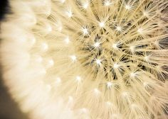 Summer Fireworks  Fine Art Photography Print of by KeriBevan, $16.00