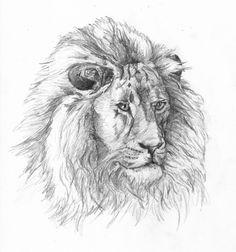 Pencil Drawn Lion | briancarper.net (λ) - Drawings