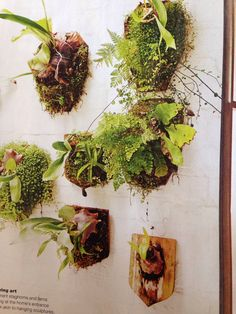 I wish we had the weather to do this. Maybe a shady damp spot? Real Living Magazine, Hanging Ferns, Succulent Terrarium, Terrariums, Greenery, Succulents, Herbs, Indoor, Organic