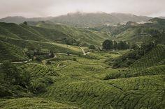 Green Field by ~jeti184 on deviantART