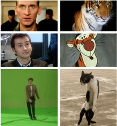 "You've seen the quote, now here's the proof: ""Eccleston was a tiger and Tennant was, well, Tigger. Smith is an uncoordinated housecat who pretends that he meant to do that after falling off a piece of furniture."" — Steven Moffat"