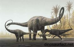 """Meclemble mambembe or """"The one who stops the flow of rivers"""" is known to have been killed by a pygmy tribe in 1954 and fits the description  of a sauropod diplodicus from the jurassic-cretaceous so after the meteor living in jungles resting for years after trees start to grow again eating to its hearts desire. Unable to be killed by anything in eny time period living its life forever. with its family of 4 no terror bird could kill it. until killed by the tribe.Seeing its family…"""