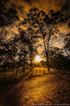 ~~Aussie Warmth | golden sun lighting a path through the trees, Brisbane, Australia by brusca~~
