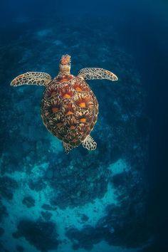 Green Turtle in the Blue Water – Sea Turtle Art – Underwater Photography – Sea Turtle Print – Sea Turtle Decor – Ocean Photography – Nature – Boomerang Sea Turtle Decor, Sea Turtle Art, Baby Sea Turtles, Turtle Love, Cute Turtles, Green Turtle, Underwater Animals, Underwater Creatures, Ocean Creatures
