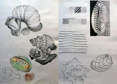 The first two pages in Hania's International GCSE Art sketchbook explored natural shell forms. Hania drew from first hand observation, using graphite and coloured pencil, then exploring shell forms in terms of line: hatching; cross-contour drawings and blind drawings etc.