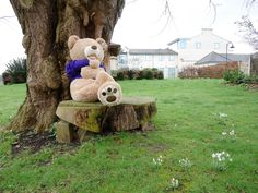 The bear is looking after the flowers in our garden to make sure they'll be ready for our #SpringOpenDay 2017. #bearhunt