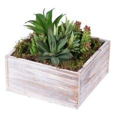 Succulent Arrangements, Succulent Pots, Floral Arrangements, Succulent Display, Succulent Containers, Container Gardening, Succulent Landscaping, Planting Succulents, Planting Flowers