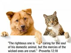 """The righteous one is caring for the soul of his domestic animal, but the mercies of the wicked ones are cruel."" -- Proverbs 12:10"