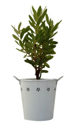 Green Thumb Gifts - Send a Plant, Plant Gifts Online, Flowering Plant Gifts
