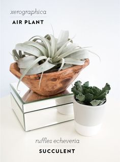 Favorite Houseplants