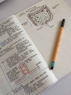 "themotivatedstudent: ""6/04/15: Kinda proud of my biology notes. Especially the large intestine freehand drawing. :) """