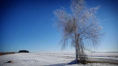 'Lonely tree' - #Grossrupprechts #Waldviertel #Austria #Österreich #photography #landscape #nature #winter #snow #cold #tree #kleintiermarkt