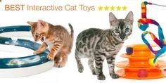 Cats Toys Ideas - Here is our list of the best interactive cat toys that will keep even the pickiest cats entertained and amused! www.bengalcats.co... - Ideal toys for small cats