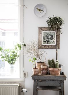 your green jeans on. green potted plants and cacti via elle decoration. / sfgirlbybaygreen potted plants and cacti via elle decoration. Sweet Home, Decor Scandinavian, Big Bathrooms, Bathroom Trends, Bathroom Ideas, Home And Deco, Green Plants, Indoor Plants, Potted Plants