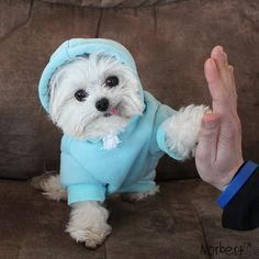 "catsbeaversandducks: "" This little guy gives the coolest high-fives EVER. Photos by ©Norbert The Dog """