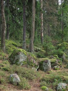Stony forest in Langinkoski, Finland .... this place is near to my old school :'DDD kinda cool to find it here on Pinterest!