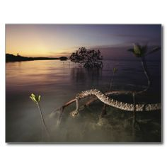 130 best greeting cards posters images on pinterest florida bay everglades national park florida postcard m4hsunfo