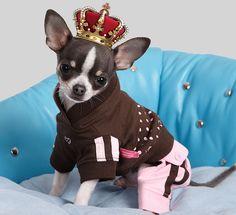 top models caninos