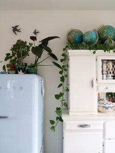 Pothos alocacia pilea globes urban jungle blogger