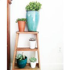succulent-style-with-jaime-marie-hill-needlesandleaves_net.jpg