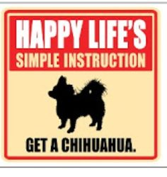 A Happy Life's Simple Instruction:  Get A Chihuahua!  www.chiwawadogs.net