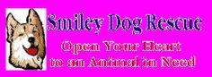 Smiley Dog rescue