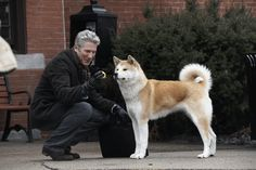 Akita Inu y Richard Gere Love My Dog, Akita Dog, Akita Puppies, Richard Gere, Hachi A Dogs Tale, Cute Puppies, Dogs And Puppies, A Dog's Tale, Pets
