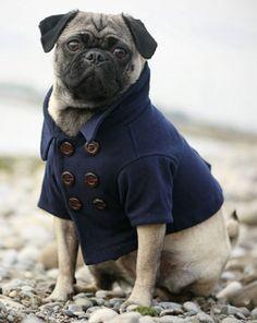CENA FASHION - Moda Pet - Inverno