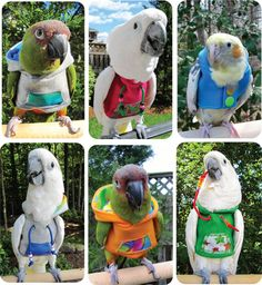 Fashion Hoodies for your feather plucking birds or those who might catch a chill. Oh boy, looking very cool! :)