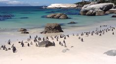 Explore the gems of Cape Town with these beautiful sights that should be top of your list of things to do. Boulder Beach, Out Of This World, Marine Life, Cape Town, Bouldering, South Africa, Creatures, Explore, Water