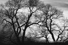 Image result for black and white trees
