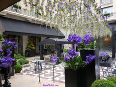 George V Hotel and Jeff Leatham, Paris - Travel To Eat Las Vegas Airport, Las Vegas Hotels, Paris Hotels, Hanging Orchid, Jeff Leatham, Vanda Orchids, Orchid Arrangements, Orchid Care, Four Seasons Hotel