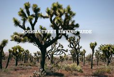 The official unofficial Joshua Tree Drinking Guide